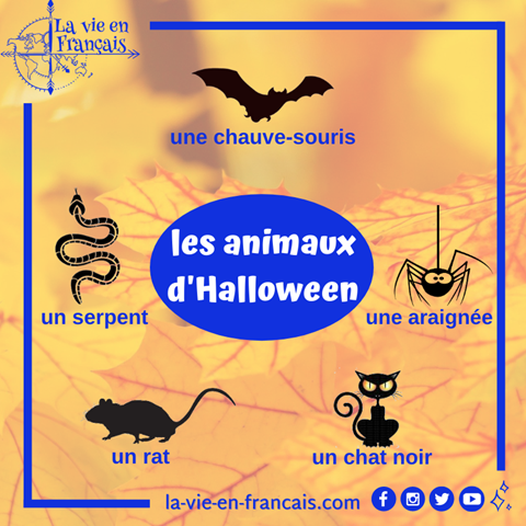 animaux_dHalloween