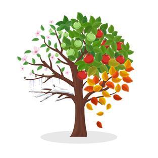 arbre_quatre_saisons